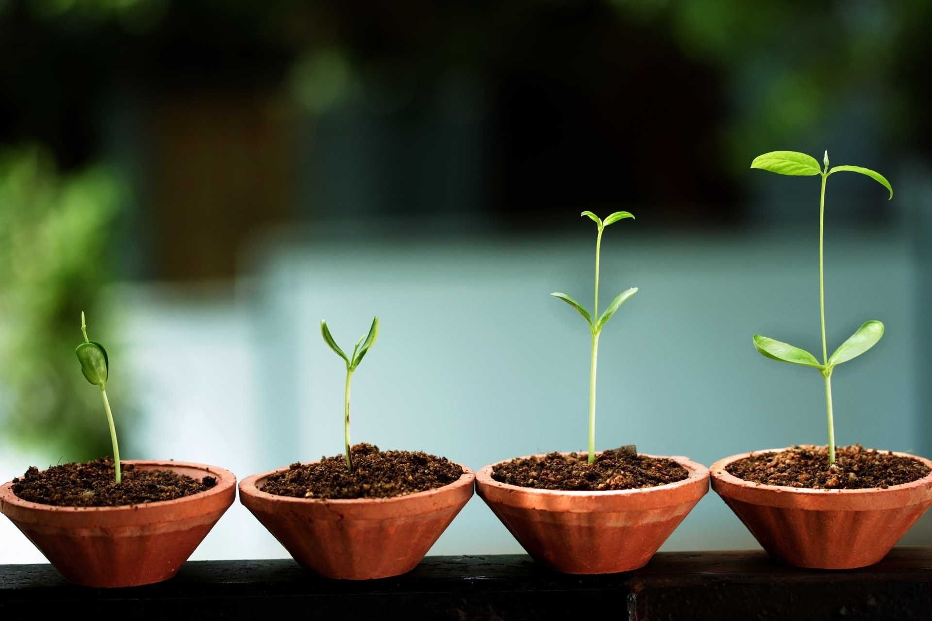 Starting a Startup - Laying the Groundwork for Your Own Company